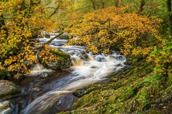 Autumn colours in the river just above the lower cascade