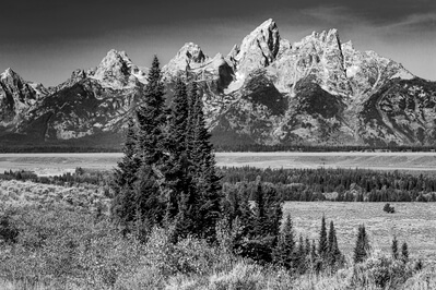 photos of Grand Teton National Park - Trees along Highway 89/191