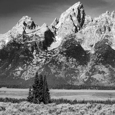 images of Grand Teton National Park - Trees along Highway 89/191