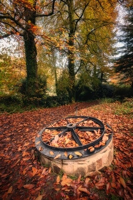 photo spots in South Wales - Colby Woodland Garden