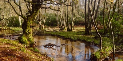 photos of Dorset - Wareham Forest