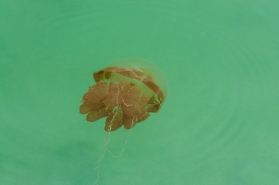 photo locations in Indonesia - Jellyfish Lake at Pulau Kakaban