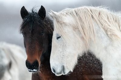 photography locations in Bosnia and Herzegovina - Wild Horses at Livno