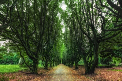 Denmark photography locations - Tree Alley, Vestre Cemetery