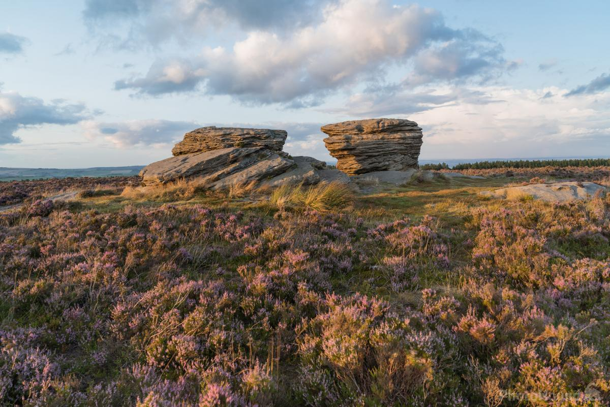 Ox Stones Golden Heather