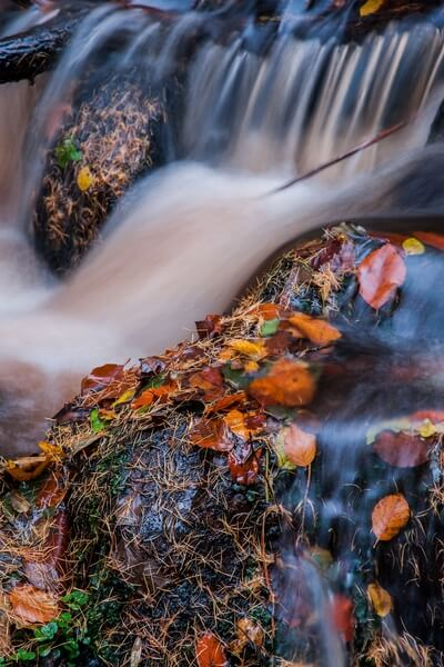 Wyming Brook Autumn Abstract
