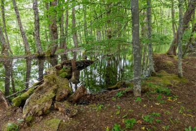 photo spots in Plitvice Lakes NP - Flooded Forest