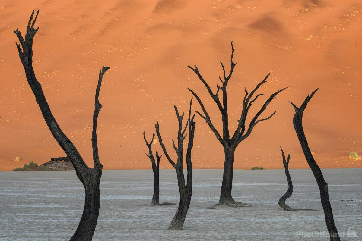 Deadvlei The Graveyard