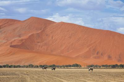 pictures of Sossusvlei - Wildlife
