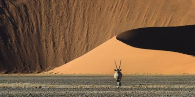 photos of Sossusvlei - Wildlife