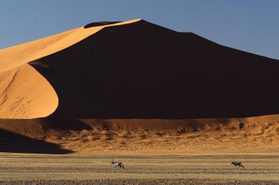 images of Sossusvlei - Wildlife