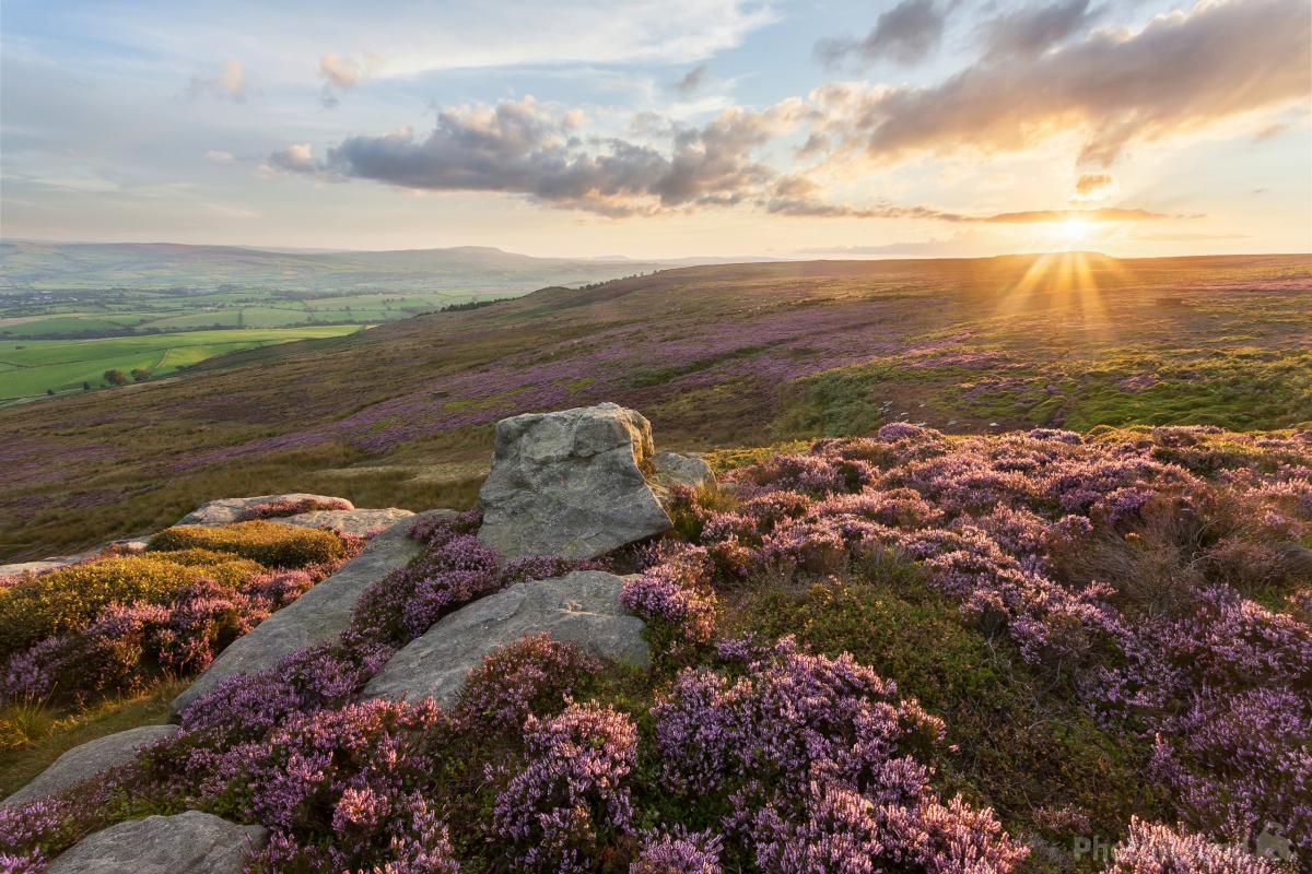Sunset on the heather