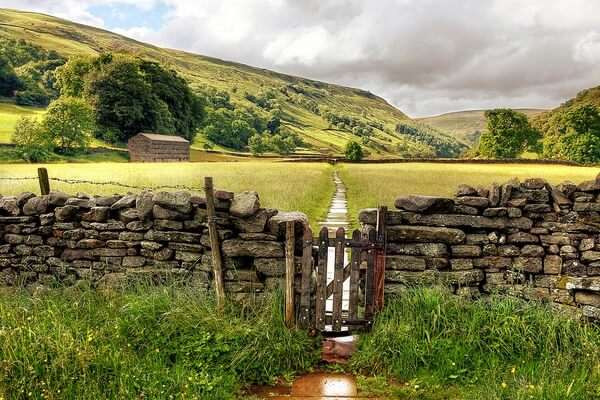 Muker Meadows, Swaledale