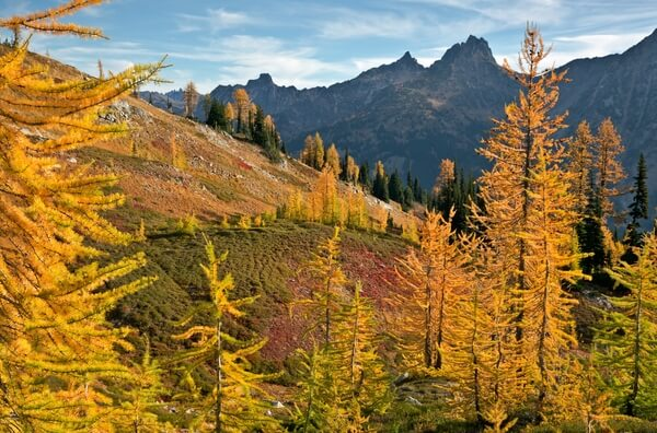 Fall time near Maple Pass