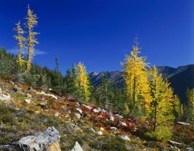 pictures of North Cascades - Harts Pass