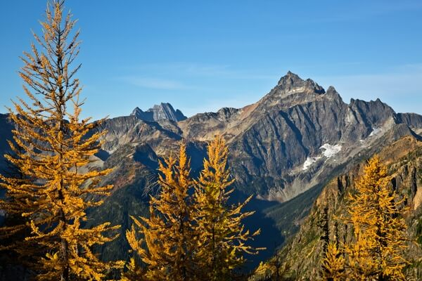 Larch Trees at Cutthroat Pass