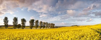 England instagram spots - Rapeseed Fields with Rope Swing