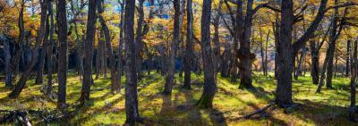 photo locations in Argentina - EC - Beech Forests