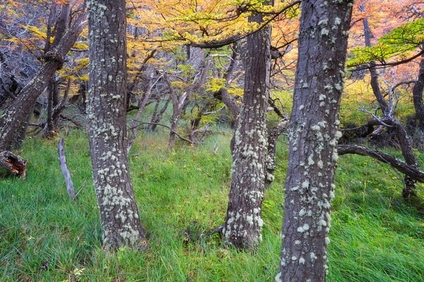 Beech-Forests