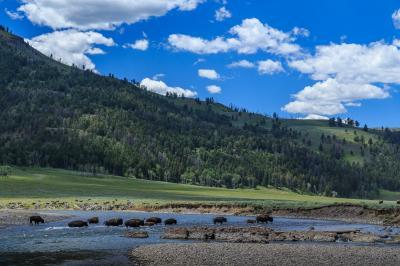 images of Yellowstone National Park - Lamar River/Valley
