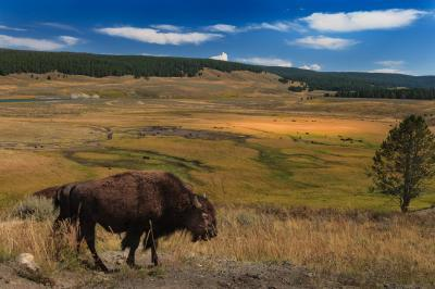 images of Yellowstone National Park - Hayden Valley
