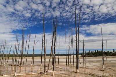 "photos of Yellowstone National Park - FPP - ""Bobby Socks"" Trees"
