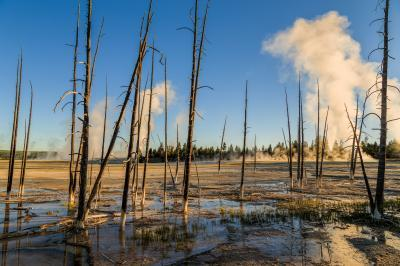 "images of Yellowstone National Park - FPP - ""Bobby Socks"" Trees"