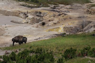 pictures of Yellowstone National Park - Mud Volcano Area (MVA) General