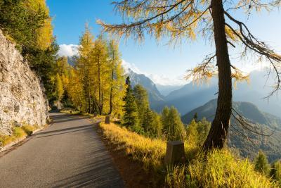images of Triglav National Park - Alpine Road & Larch Trees
