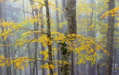 pictures of Triglav National Park - Beech Forest