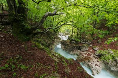 pictures of Triglav National Park - Možnica River