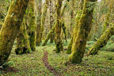 photo spots in Olympic National Park - Sams River Trail