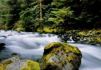 photos of Olympic National Park - North Fork Trail