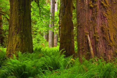 images of Olympic National Park - North Fork Quinault River Trail