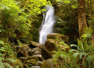 photos of Olympic National Park - Merriman Falls
