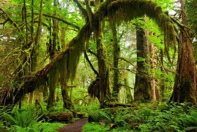 images of Olympic National Park - Maple Glade Nature Loop