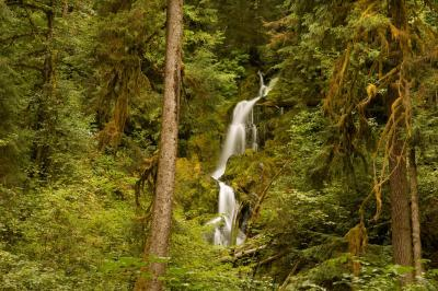 photography locations in Olympic National Park - Hoh River Trail