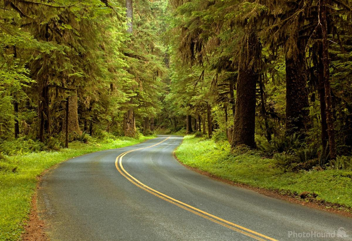 Hoh River Road
