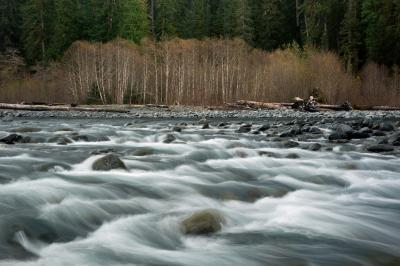 images of Olympic National Park - Hoh River Trail