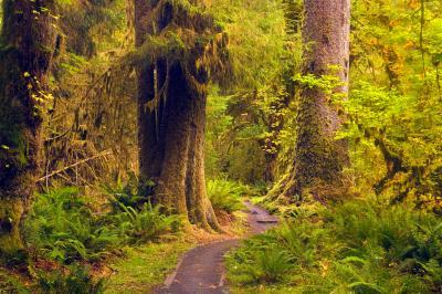 photos of Olympic National Park - Hoh River Trail