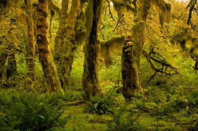pictures of Olympic National Park - Hoh River Trail