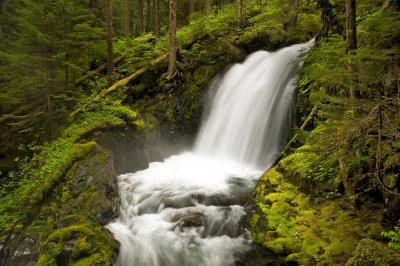 pictures of Olympic National Park - Boulder River Trail