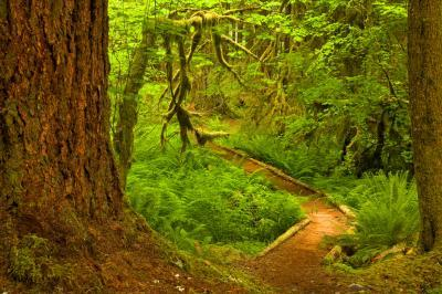 Olympic National Park photography locations - Ancient Groves Nature Trail
