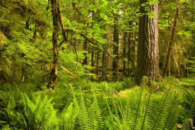 pictures of Olympic National Park - Ancient Groves Nature Trail