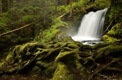photos of Olympic National Park - Boulder River Trail