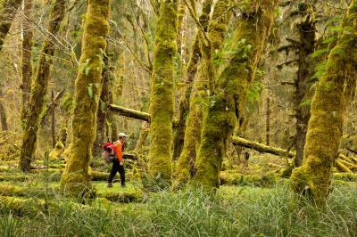images of Olympic National Park - Sams River Trail