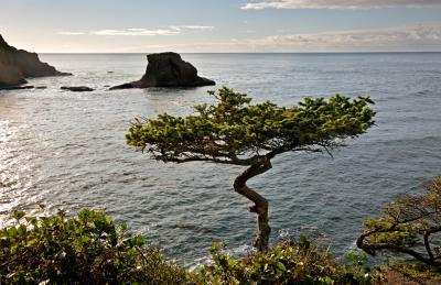 images of Olympic National Park - Cape Flattery Viewpoint