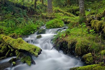 Olympic National Park photo locations - Elwha River Trail