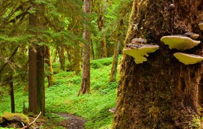 images of Olympic National Park - Enchanted Valley