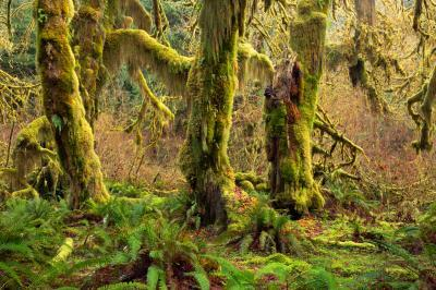 photos of Olympic National Park - Hall of Mosses